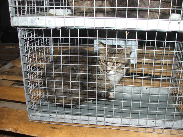 get rid of feral cats