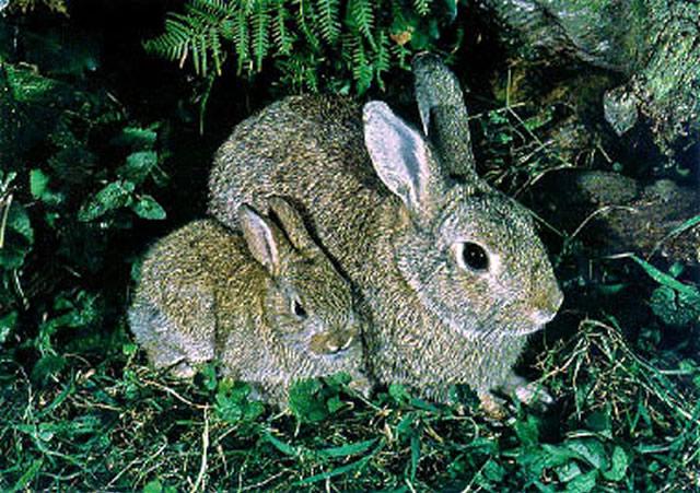 Wild Backyard Rabbits : How to Get Rid of Rabbits