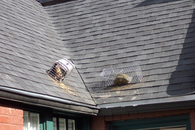 Allstate Animal Control squirrel traps on roof
