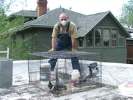Allstate Bird Control pigeon trap