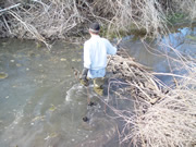 beaver trapper in water