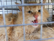 Allstate Animal Control photo wild cat