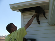 Allstate Animal Control technician removing a dead raccoon through soffit